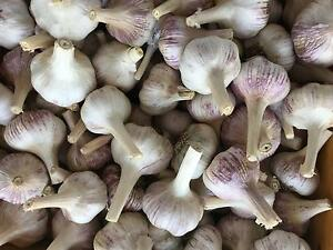 Garlic For Sale Moonbi Tamworth Surrounds Preview