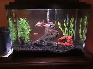 10 Gallon Functioning fish tank, with fish and accessories