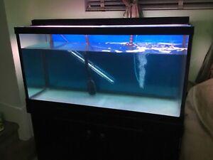 Aquarium 100 gallon ,