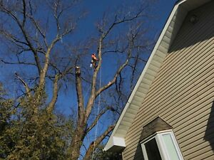 Tree Service ( removals and trimming *winter special *)