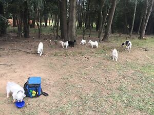 Sydney based doggy meet ups Milperra Bankstown Area Preview