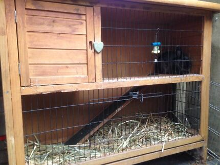 Rabbit and hutch Good Home Only Ballajura Swan Area Preview