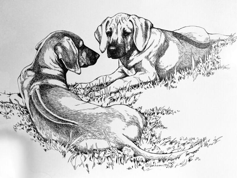 rhodesian ridgeback Original Pen And Ink From 1990 By Martha Van Loan