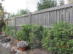 2 Catnip enclosures for the price of one Clayfield Brisbane North East Preview