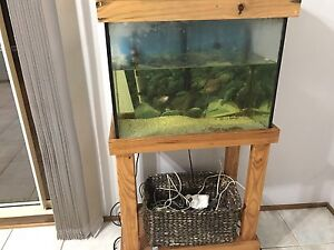 Free fish tank and fish Warragamba Wollondilly Area Preview