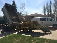 Tree Service and Cleanup