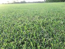 Turf for sale open 7 days a week Maroochydore Maroochydore Area Preview