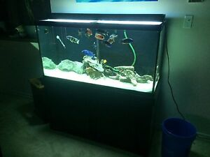 90 gallon cichlid tank