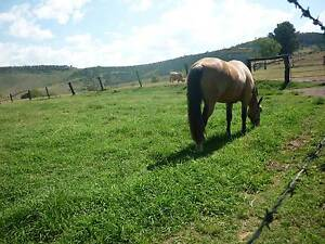 80 ACRES HOUSE AND LAND MULGOWIE QLD Laidley Lockyer Valley Preview