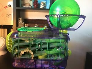 Russian dwarf hamster & ready to go care kit