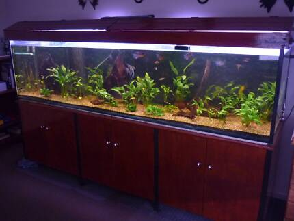 FISH TANK. 8 FOOT COMPLETE WITH EVERYTHING. Sippy Downs Maroochydore Area Preview