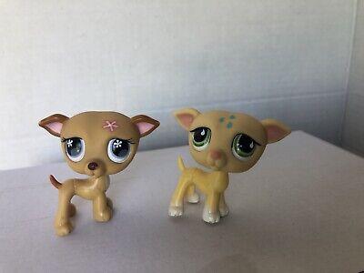 Littlest Pet Shop Lot Dog Greyhound Whippet 875 498 Set Authentic Lps