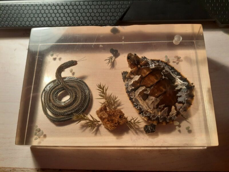 Vintage Lucite Paperweight with Real Turtle and Snake