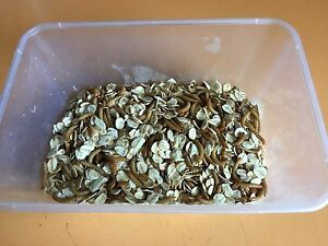 Mealworms Welshpool Canning Area Preview