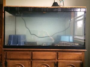 Ball Python and accessories for sale