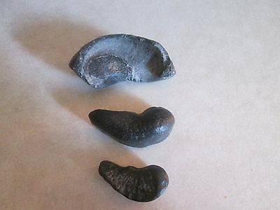 Fossil Ears Lot Of 3 North Florida
