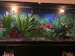 55 Gallon, With stand and accessories