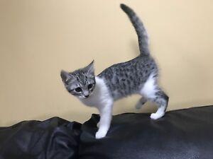 Adorable kitten ready to go now!