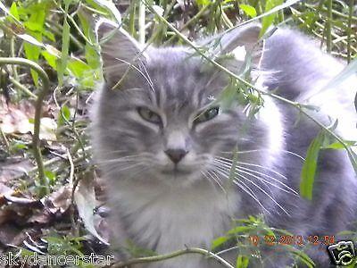 SPONSOR IN MEMORY OF FERAL CAT CASSIE RAINBOW BRIDGE VET CARE RESCUE Rec PHOTO
