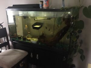 Beautiful display tank about 55 gallon