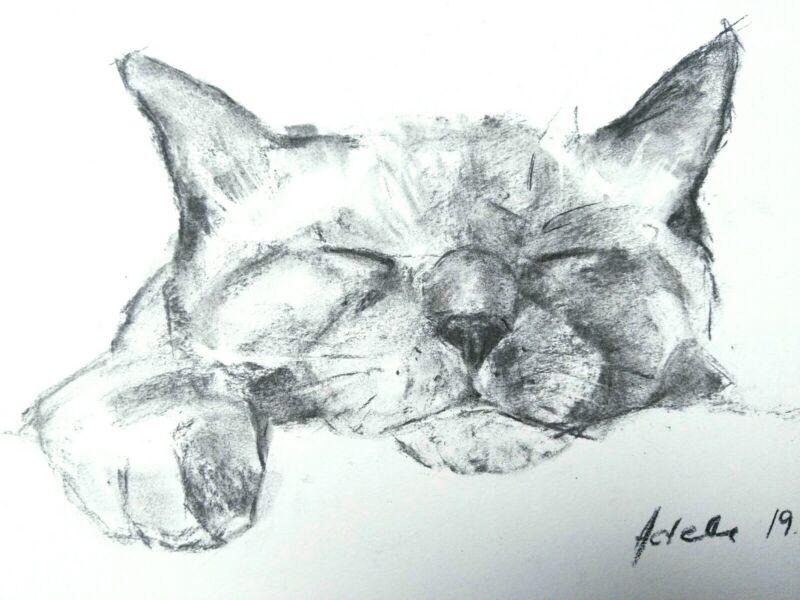 Sleeping+Lazy+Cat+Charcoal+Drawing+A4+Original+Art+Pet+Portraits