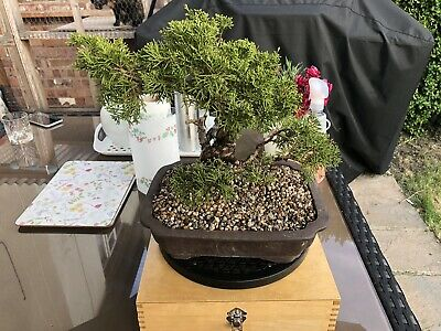 Bonsai Toolbox with Turntable