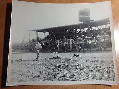 1950'S ACTUAL 8 X 10 PHOTO OF CARL BRADFORD PENNING DUCKS AT ELKO RACE MEET NV