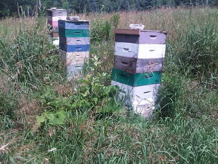 Wanted: Abandoned/Unwanted Bee Hives Sassafras Yarra Ranges Preview