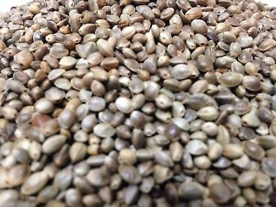 Hemp Seeds Nuts 1.5 LB (1lb 8oz) -Wholesale Pricing /Best (Best 1 8 Buggy)