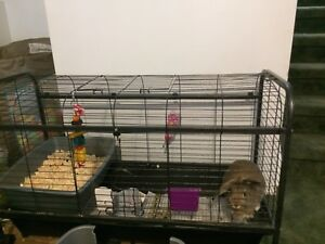 Dwarf/lop bunny and cage for sale 50.00