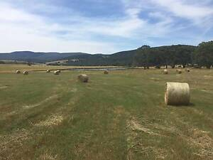 Virgin Cut Rye & Clover Large 5ft Round Hay Bales New Gisborne Macedon Ranges Preview