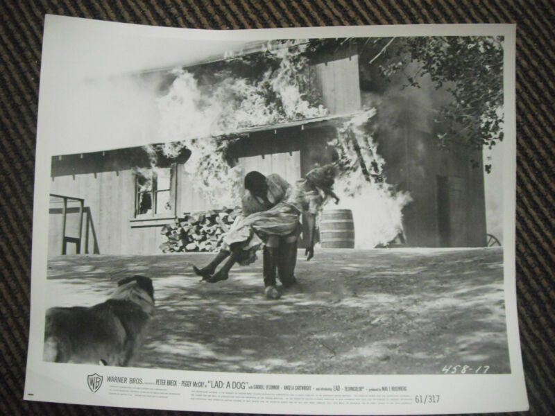Lad: A Dog 1962 B&W 8x10 Promo Photo Original Lobby Card Fire Rescue