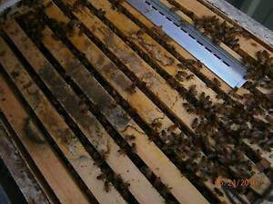 NEEDED SITES FOR HONEY BEES HIVES OF EOI. Rosemeadow Campbelltown Area Preview
