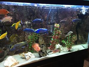 Selling African cichlids