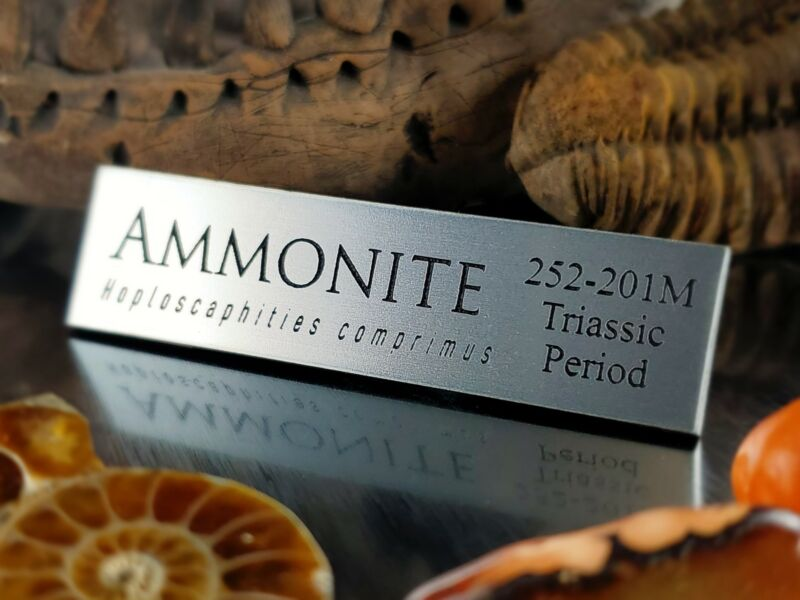 AMMONITE FOSSIL DISPLAY NAME PLATE - EXHIBIT ARTIFACT LABEL-MUSEUM QUALITY