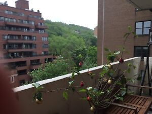 Grand Apartment 41/2 centre ville