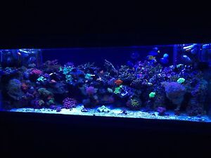 180 gal reef tank full set up everything you will need