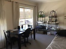 Room available in Beaumaris VIC- South Concourse Beaumaris Bayside Area Preview