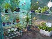 plants for sale Elimbah Caboolture Area Preview
