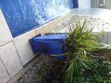 PLANT IN LARGE BLUE POT Macquarie Links Campbelltown Area Preview