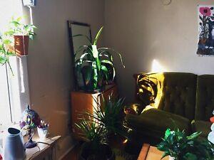 Seeking House Plants!