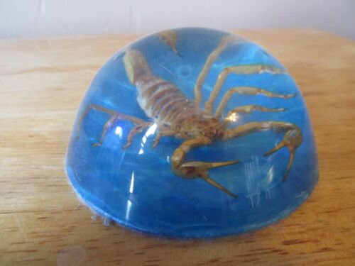 Vintage SCORPION Encased in Acrylic Dome Shaped Paperweight w/Turquoise Felt