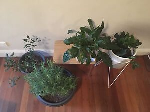 Indoor/outdoor plants Newtown Inner Sydney Preview