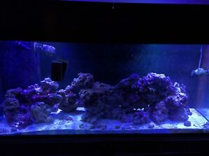 Large salt water tank with sump led lights and lots more!!!