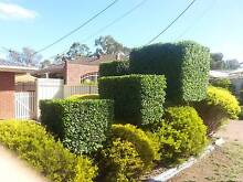 GARDENING, MOWING, WEEDING, TIDY UPS, TRIMMING & MORE JUST ASK Munno Para West Playford Area Preview