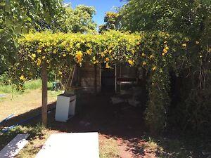 Shed - weatherboard, hardwood, doors, windows, corrugated iron Kearneys Spring Toowoomba City Preview