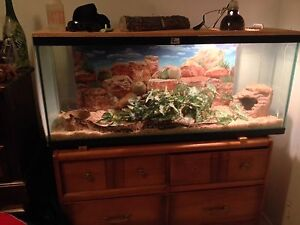 normal ball python + tank and accessories for sale