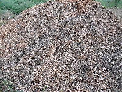 LRG FR (3 1/2 Gallons) Box Colorado Spruce Smoking/Garden Wood Chips/Mulch -