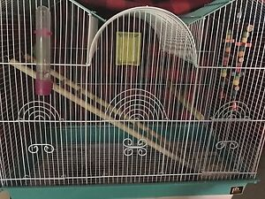 Green Budgie needs a good home + Cage