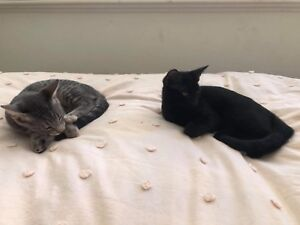 Kittens need homes